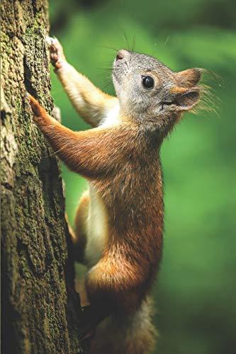 Eichhörnchen Notizbuch: blanko Malbuch / Tagebuch / Notizbuch ohne...