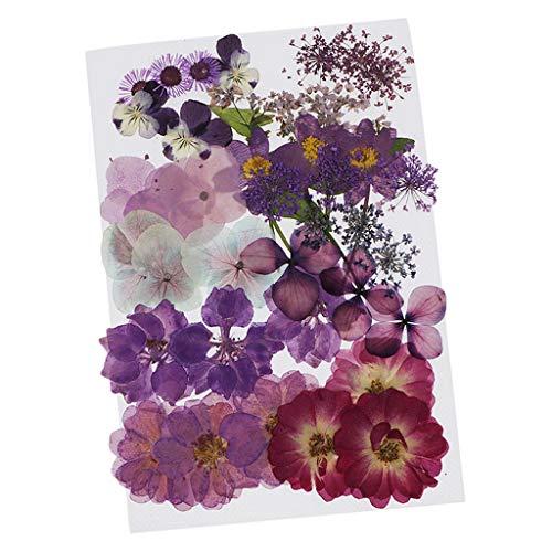 dailymall Gepresste Blumen Getrocknete Blätter Echte Trockenpresse...