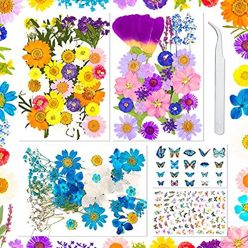 Sirecal Real Getrocknete Gepresste Blumen 202 Stück Getrocknete...