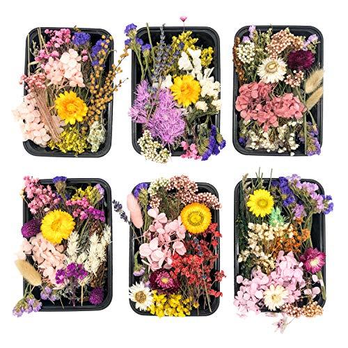Kunstharz.Art Echte und natürliche getrocknete Wild Blumen zum...